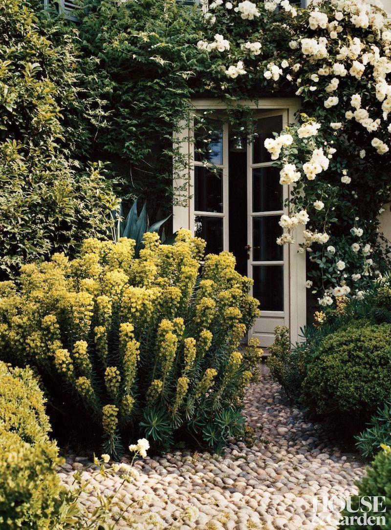 grüne pflanzen weiße blumen kleiner vorgarten ideen und inspo