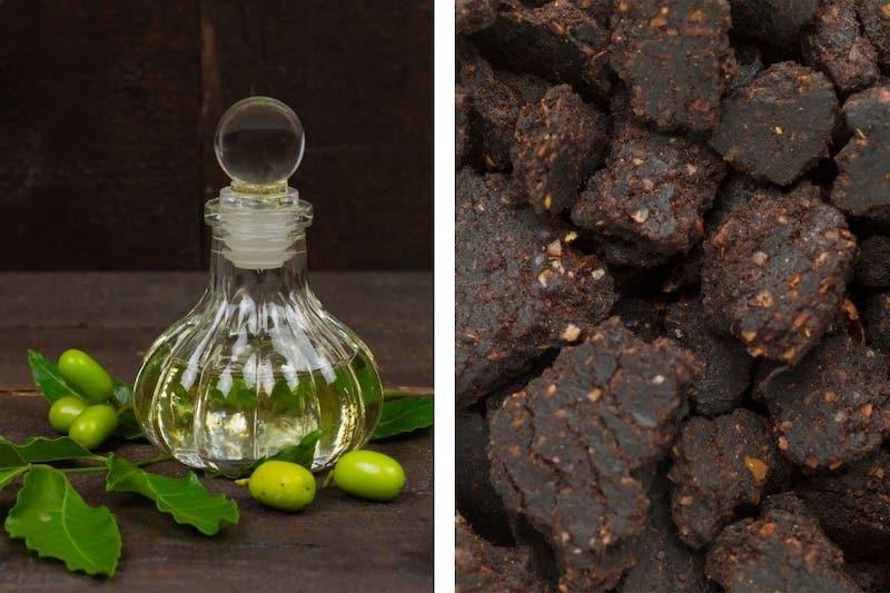 käfer im garten dickmaulrüssler bekämpfen hausmittel neemöl flasche neempresskuchen gegen dickmaulrüssler larven