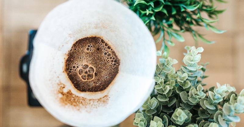 käfer im garten kaffeesatz gegen dickmaulrüssler schadbild wie dickmaulrüssler bekämpfen kaffe im filter kaffeesatz