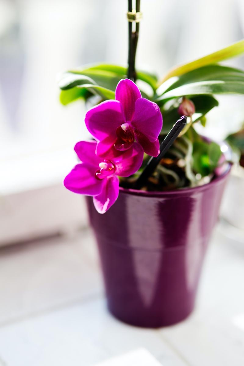 orchidee düngen wann ist der richtige zeitpunkt dafür