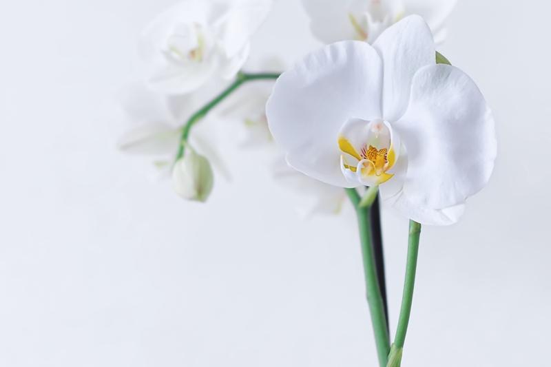 orchideen gießen wann ist die richtige zeit