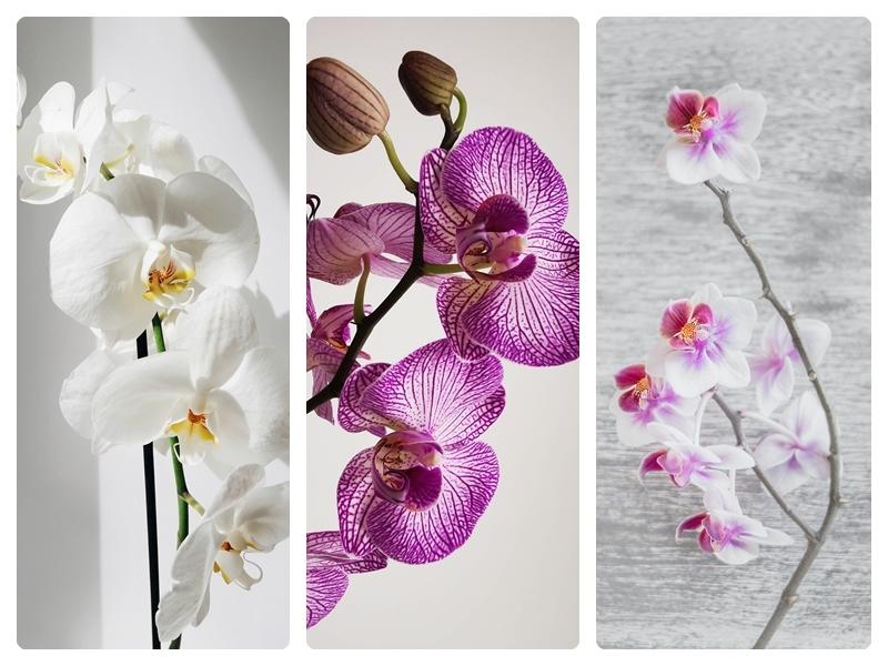 orchideen pflege tipps für anfänger und hobbygärtner