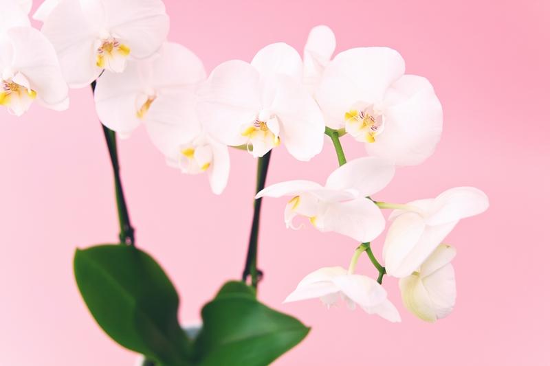 orchideen pflege tipps und wichtige infos