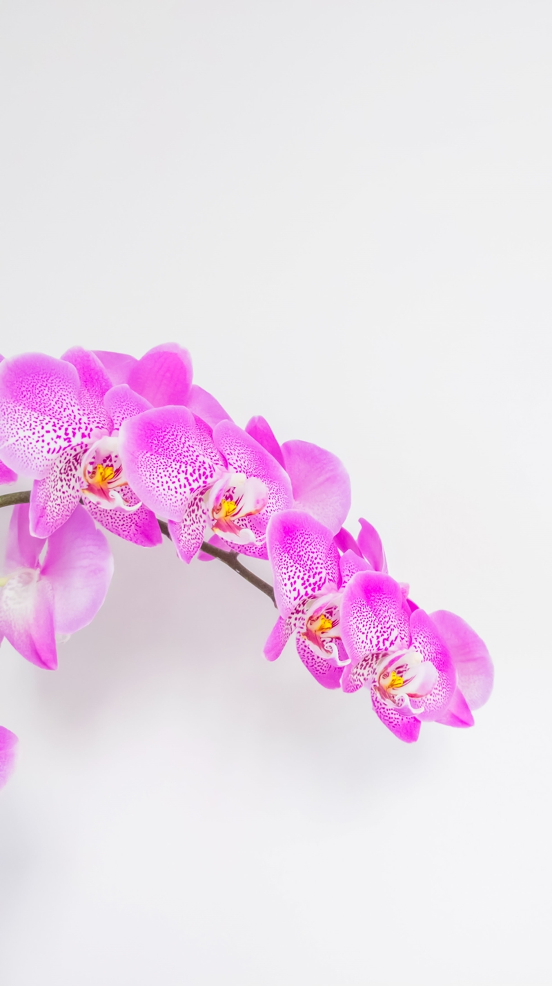 orchideen pflege wunderschöne zimmerpflanze in helllila