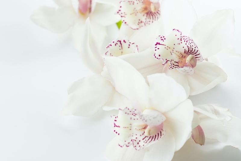 orchideen richtig pflegen wichtige pflegetipps weiße zimmerpflanze
