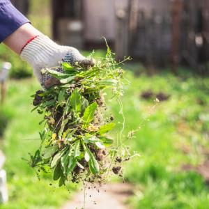 Hausmittel gegen Unkraut im Rasen