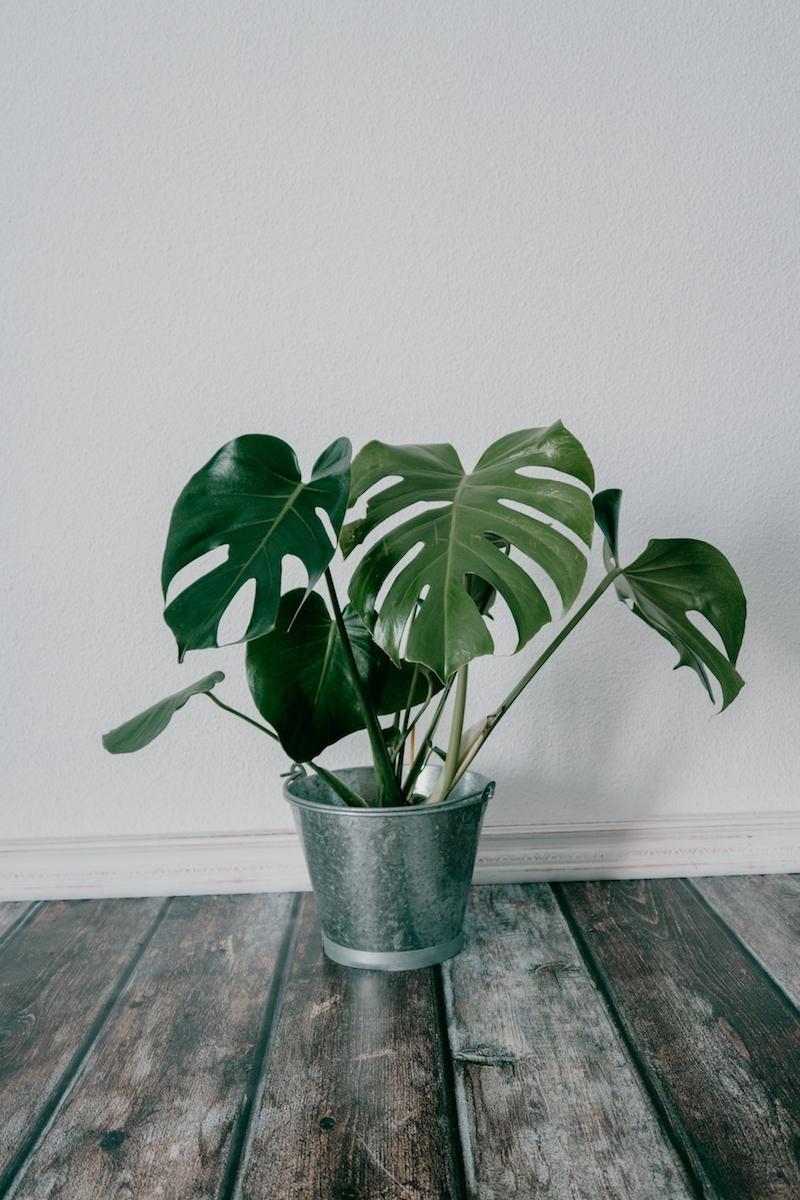 shot of an artificial houseplant in a metal bucket