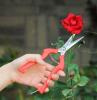 wann rosen schneiden richtiger zeitpunkt rosenschnitt rosenpflege tipps