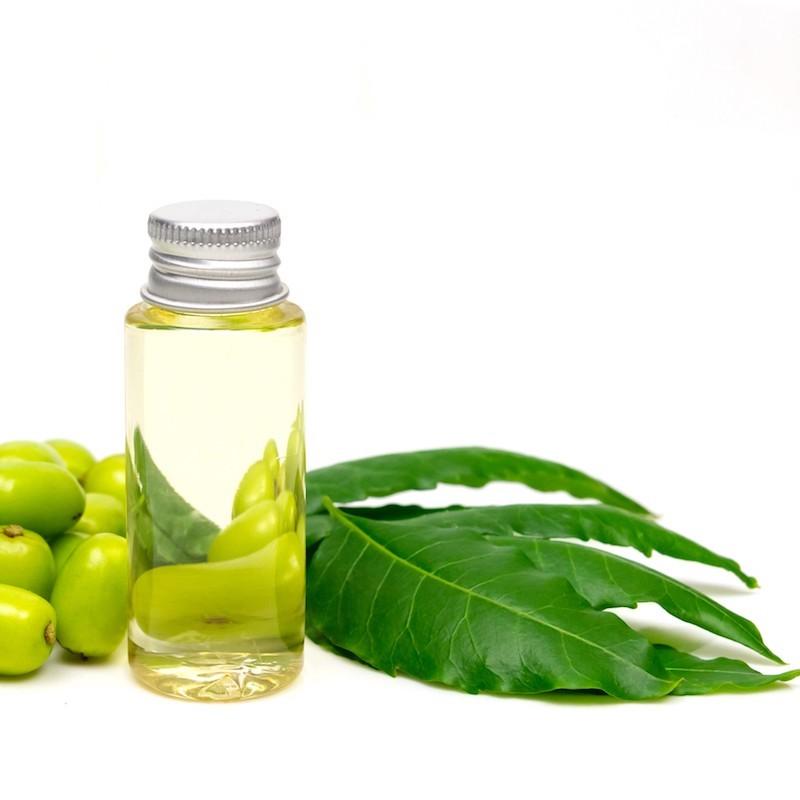 was hilft gegen dickmaulrüssler schutzmittel gegen käfer mit rüssel neemöl in flasche