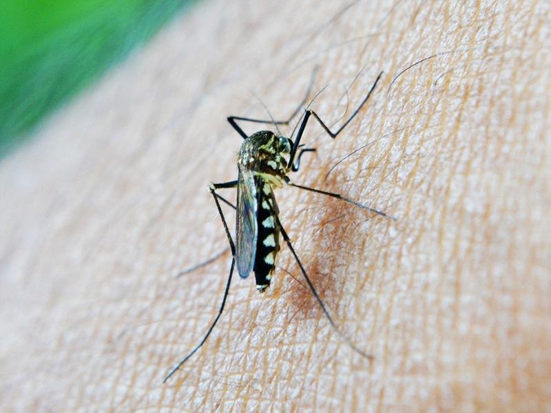 was hilft gegen mückenstiche tipps mittel