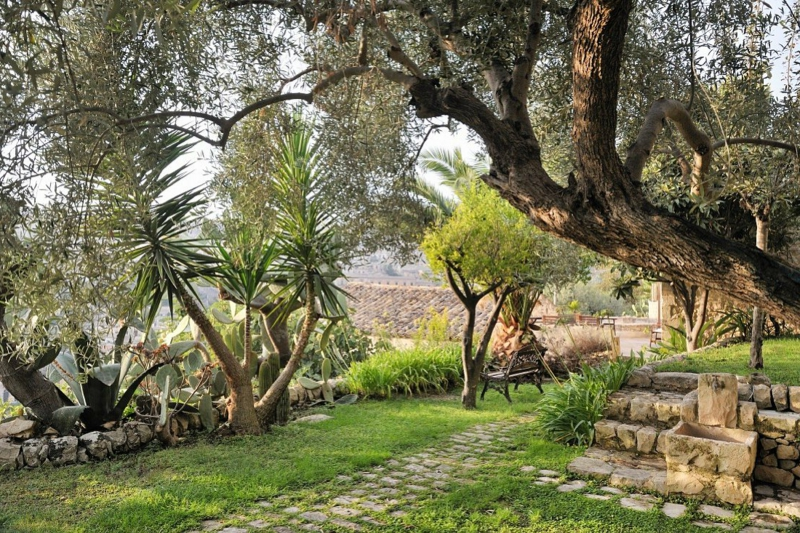 winterharte mediterrane pflanzen anlegen ein garten mit paömen und olivenbäumen