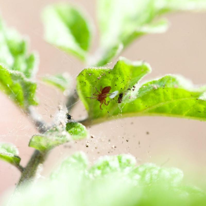 1 grüne pflanze mi kleinen spinnen essig gegen spinnmilben diy spray