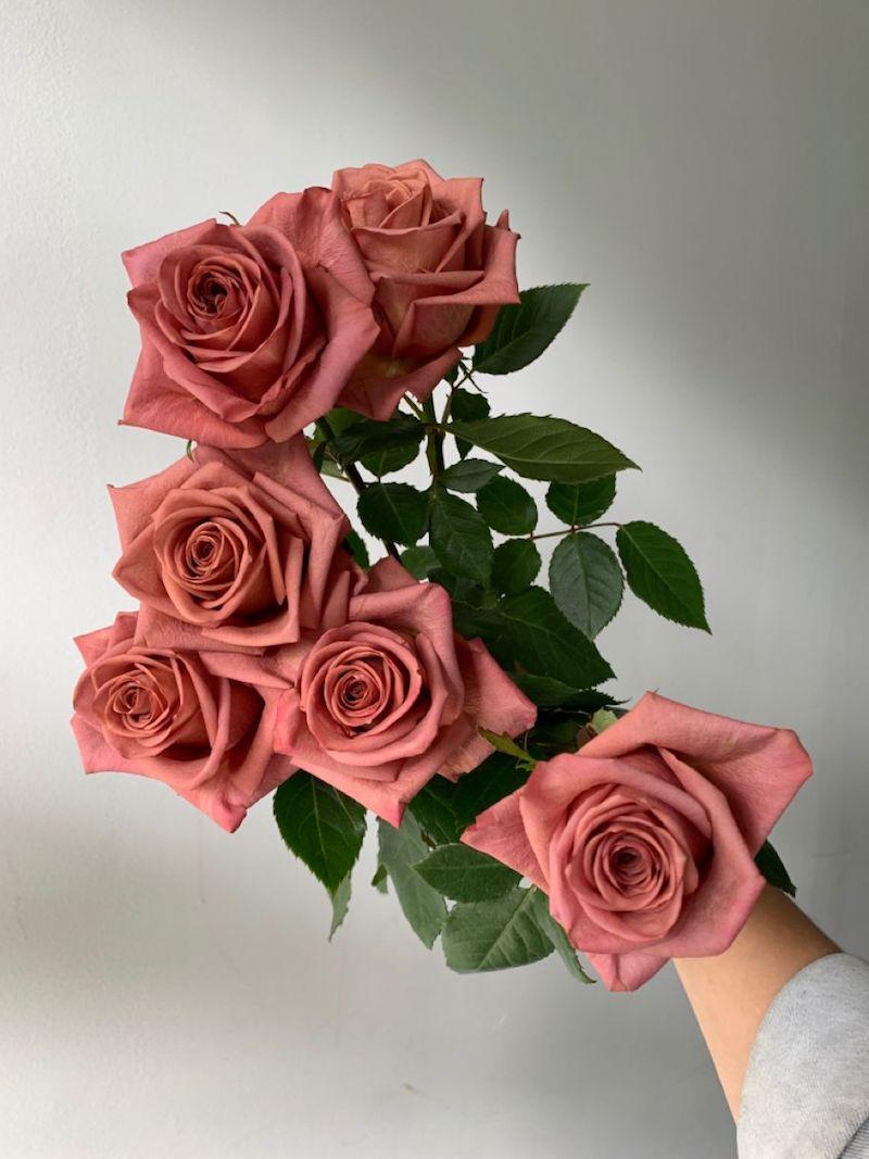 3 rosen pink lavandula mir anderen pflanzen kombinieren