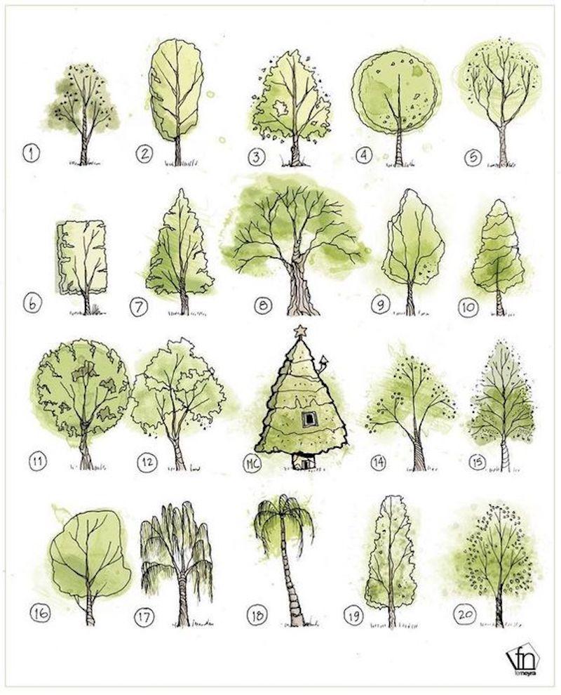 bilder zum nachzeichnen für anfänger zwanzig arten von bäume illustriert in grün und braun
