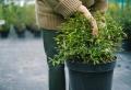 Blumenkübel richtig bepflanzen: Das Wichtigste auf einen Blick
