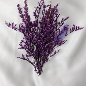 foto von lavandula welche pflanzen zu lavendel