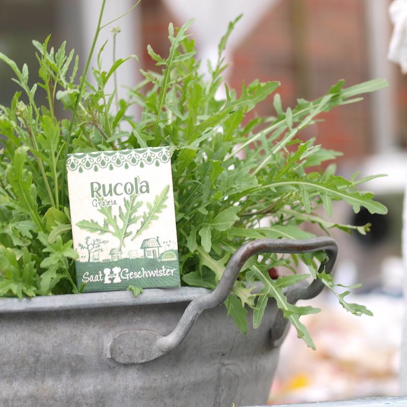 frische gemüse im september aussäen welche pflanzen im september aussäen rucola in metalltopf