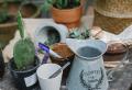 Pflanztöpfe auswählen – was sollen Sie darüber wissen?