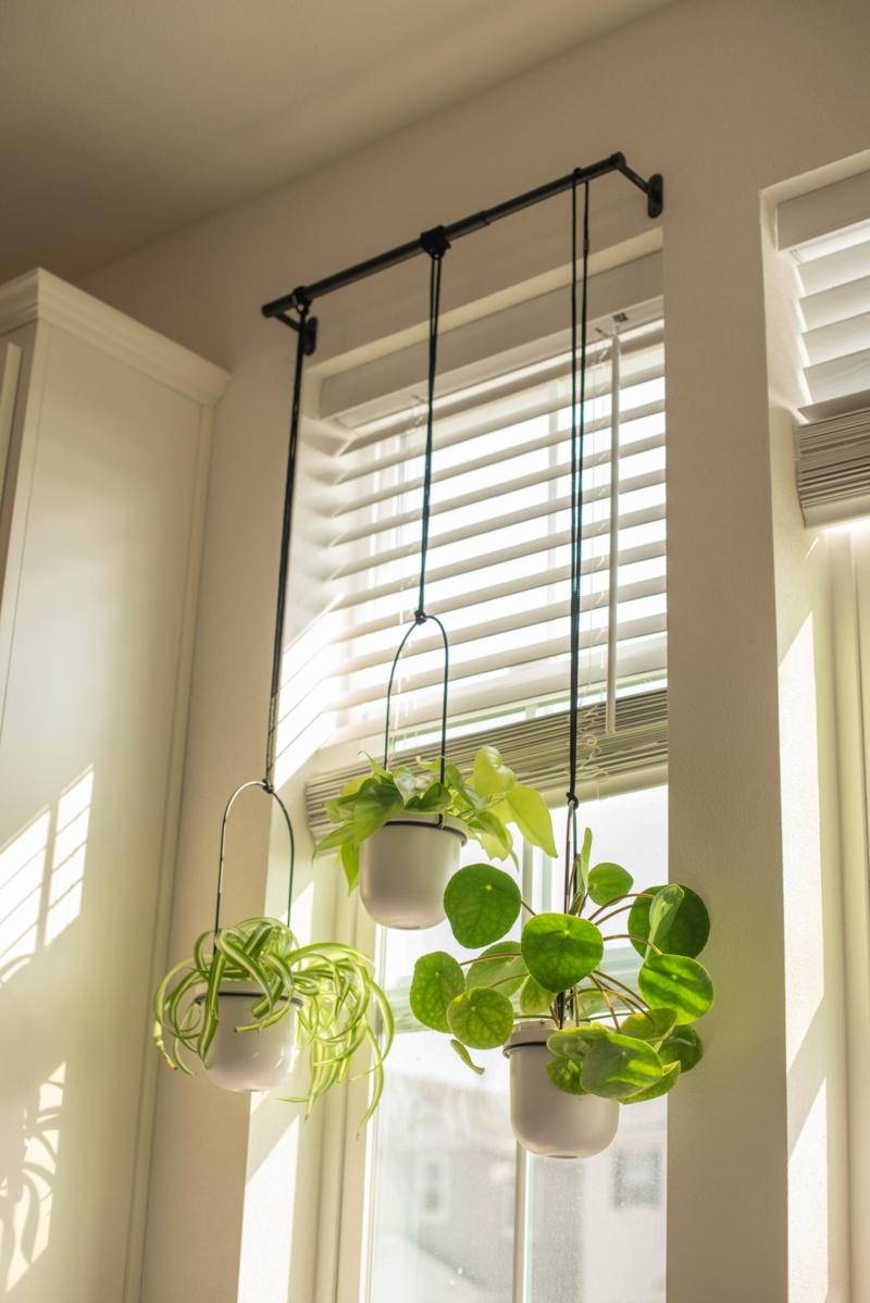 grüne pflanze einrichtung fenster sonnenschutz küche einrichtung sonnenschutz für die küche