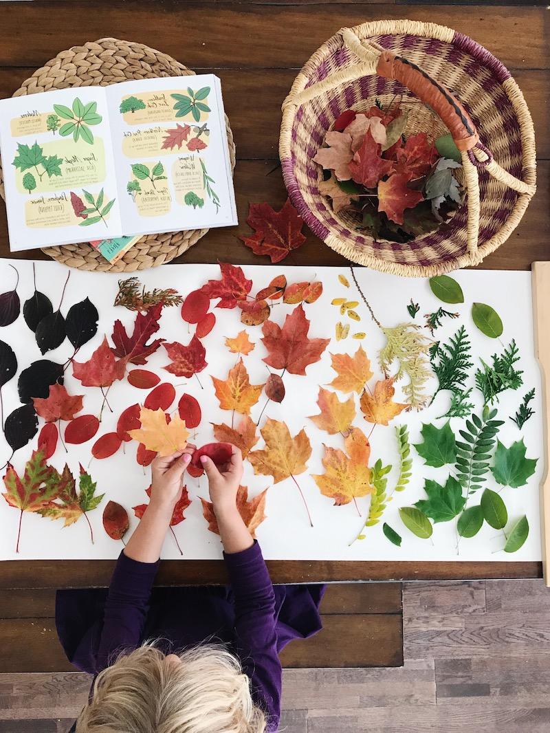 herbstdeko fenster kinderzimmer herbst kind legt bunte herbstblätter auf papier