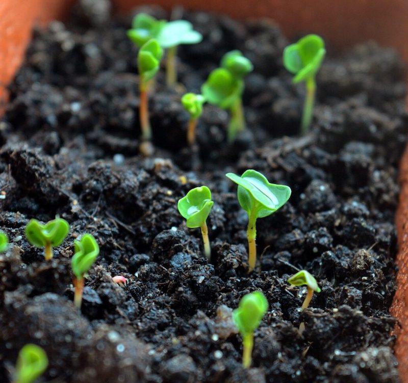 im september aussäen was kann ich jetzt aussäen kleime spinat klein