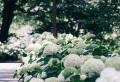 Die besten winterharten und immergrünen Kletterpflanzen