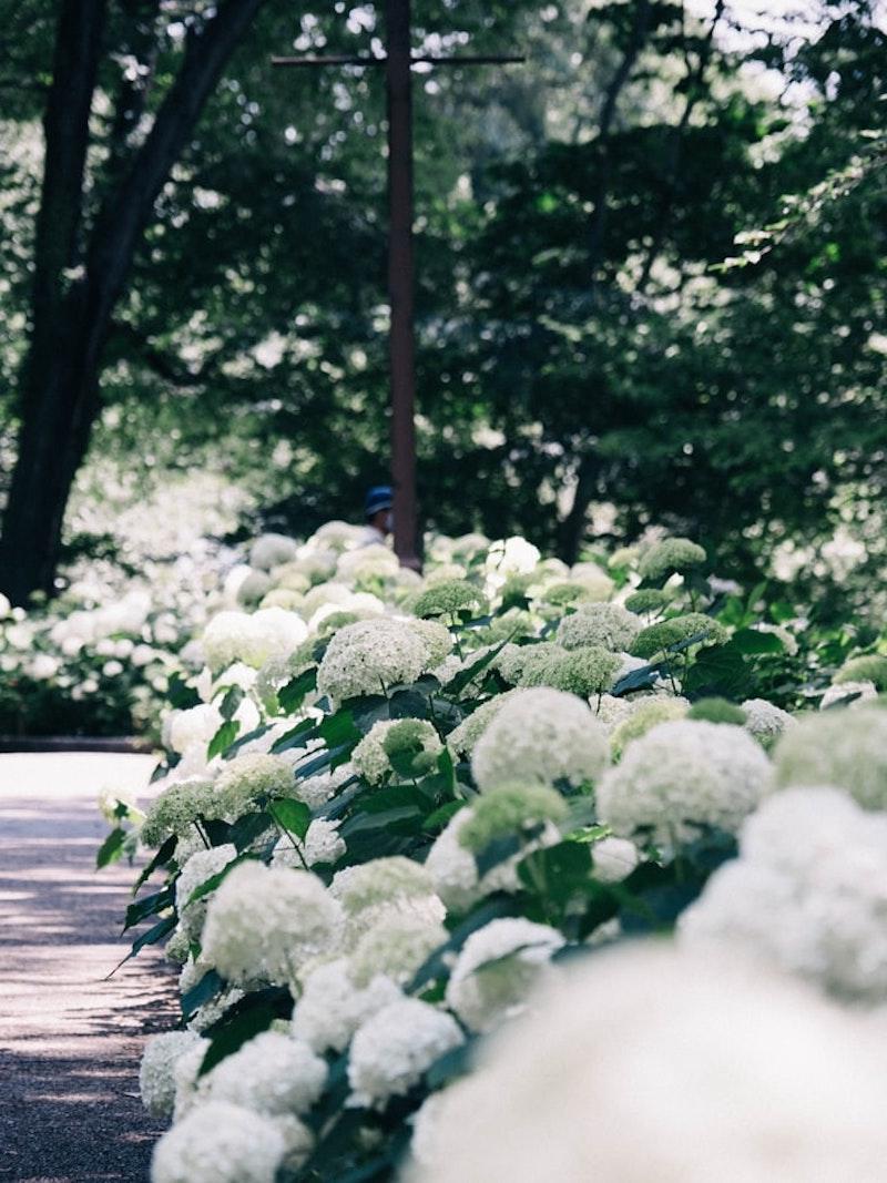 immergrüne kletterpflanzen winterhart mehrjährig schnellwachsend weiße kletterhortensie