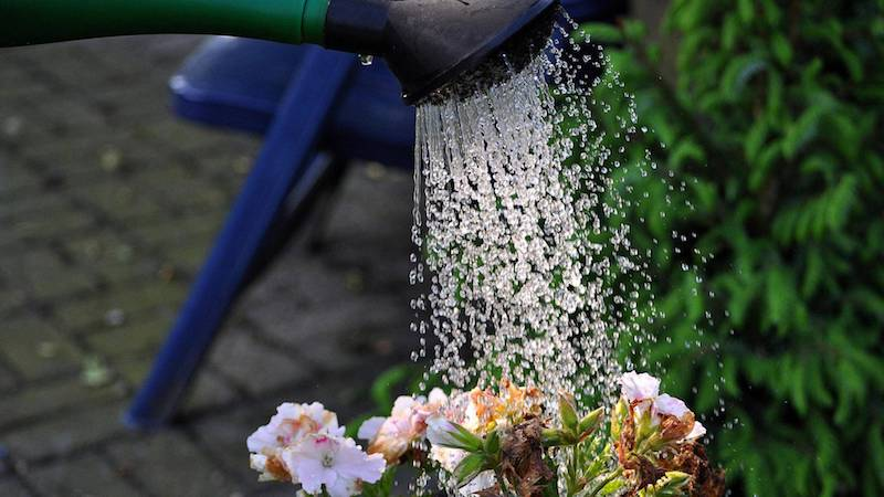 jasmin baum duftjasmin stern jasmin im garten wie pflege ich sommerjasmin wässern