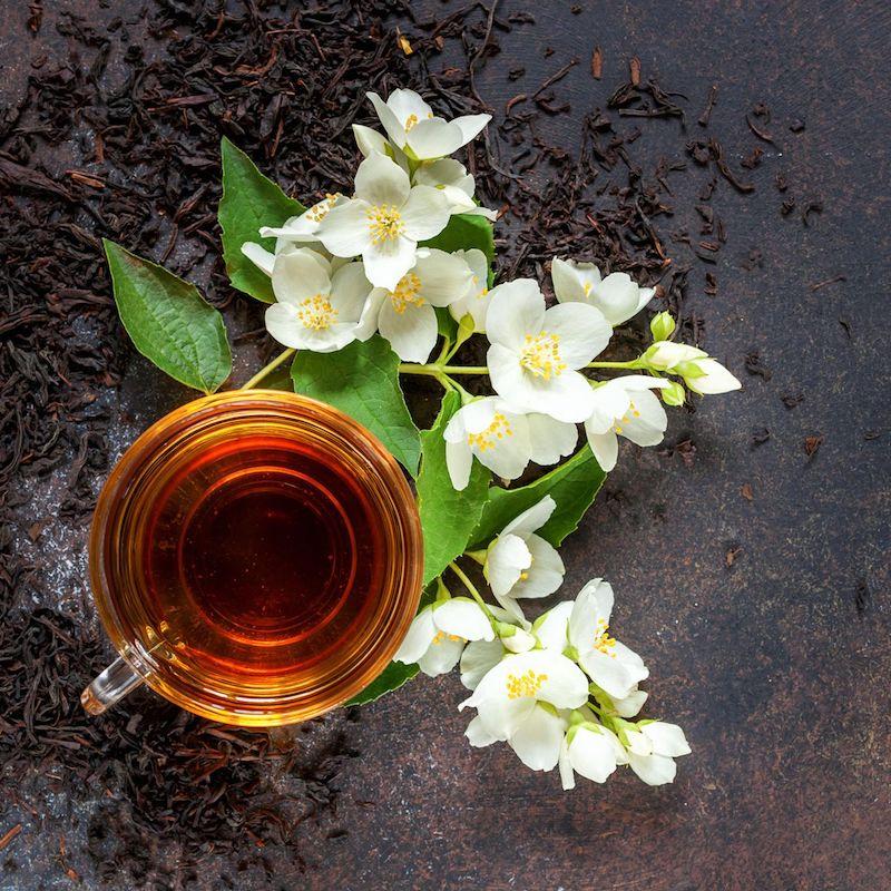 jasmin kletterpflanze jasmin busch sommerjasmin jasmintee jasminblüte