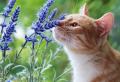 Pflanzen gegen Katzen – einfache Mittel, um die frechen Vierbeiner effektiv zu vertreiben