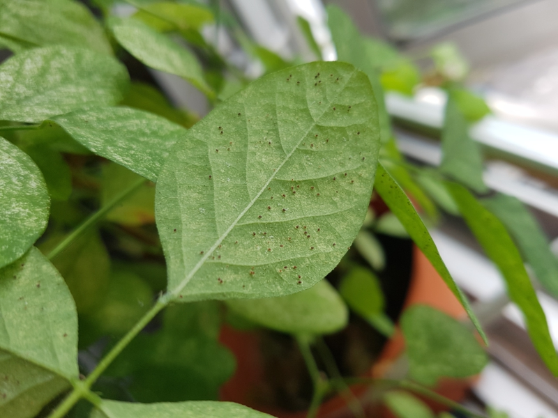 kleine spinnen art spinnmilben bkämpfen hausmittel diy rezepte anleitung