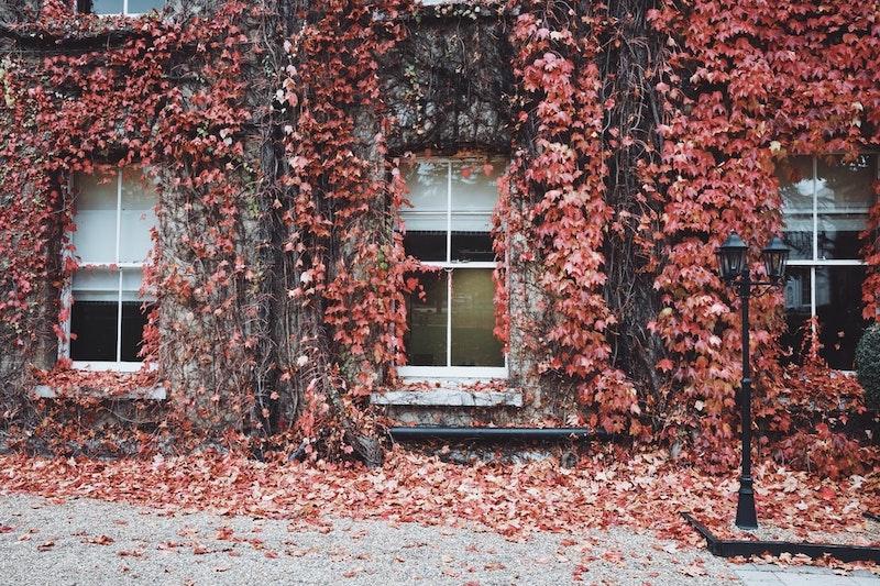 kletterpflanzen winterhart immergrün schnellwachsend balkon der gewöhnliche efeu rund um die fenster