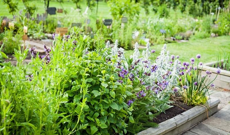 kräuter im garten anpflanzen hochbeet beet gartenfplanzen