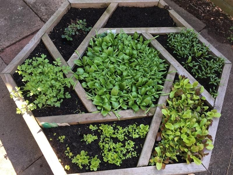 kräuter im garten anpflanzen hochbeet welche können zusammengepflanzt werden