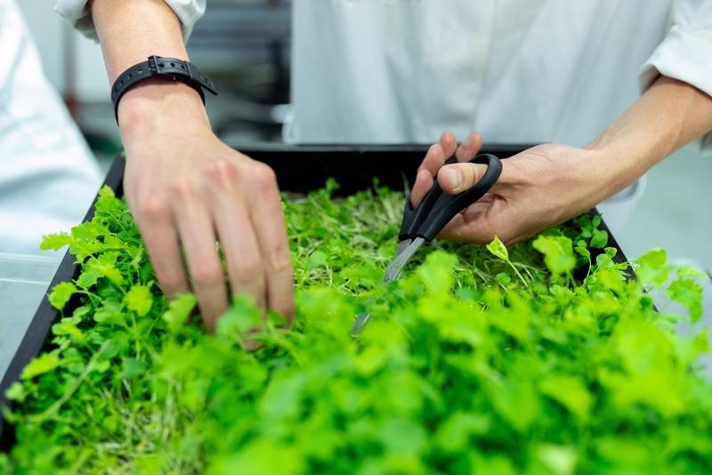 küchenkräuter pflanzen firsche kräuter zuhause