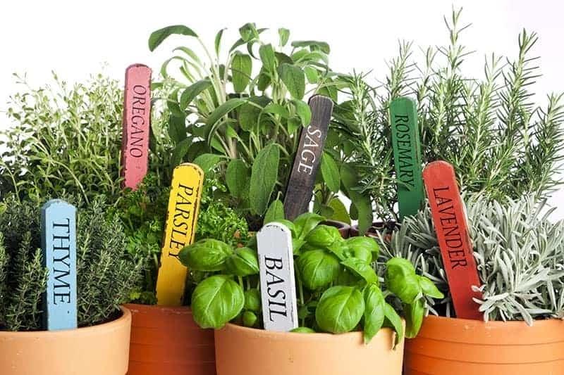 küchenkräuter pflanzen tipps ratschläge verschiedene kräuterarten