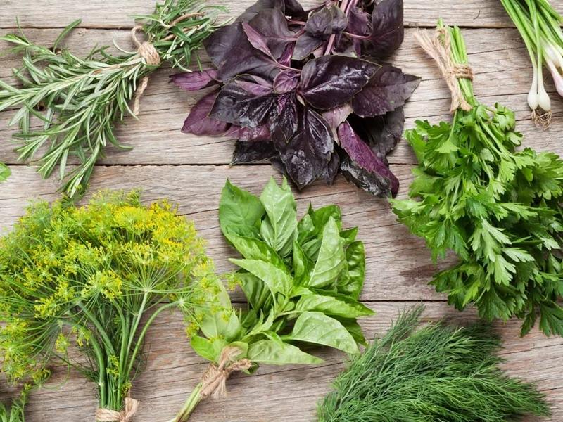 küchenkräuter pflanzen welche kräuterarten vertragen sich nicht