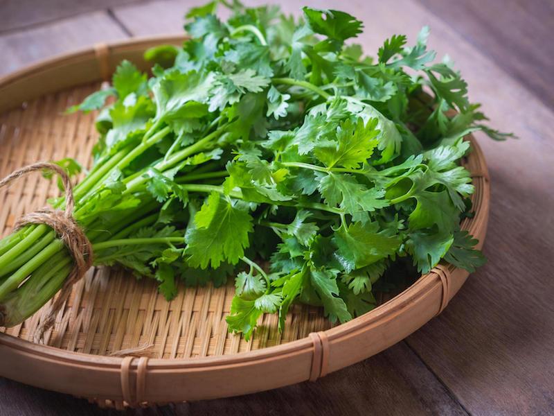 fresh coriander, cilantro leaves on basket