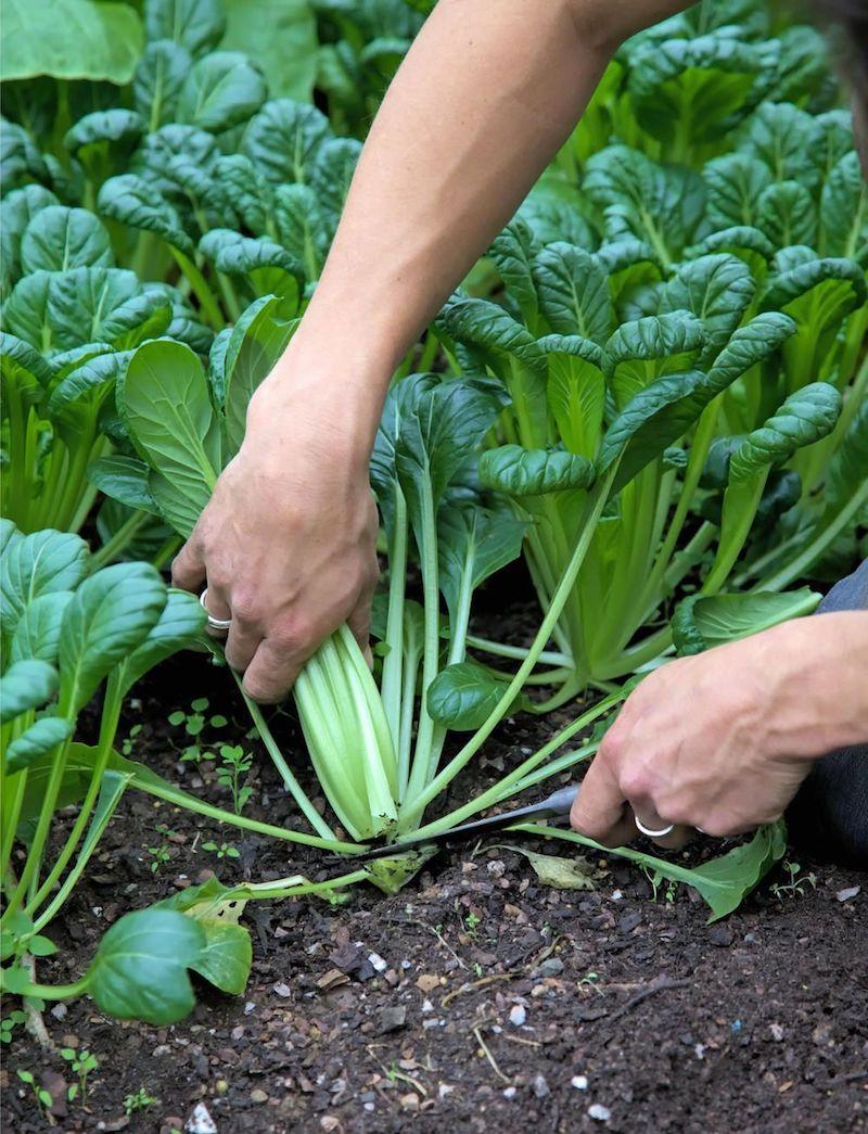 rasen aussäen im september welche gemüse im september aussäen man schneidet frische spinat im garten