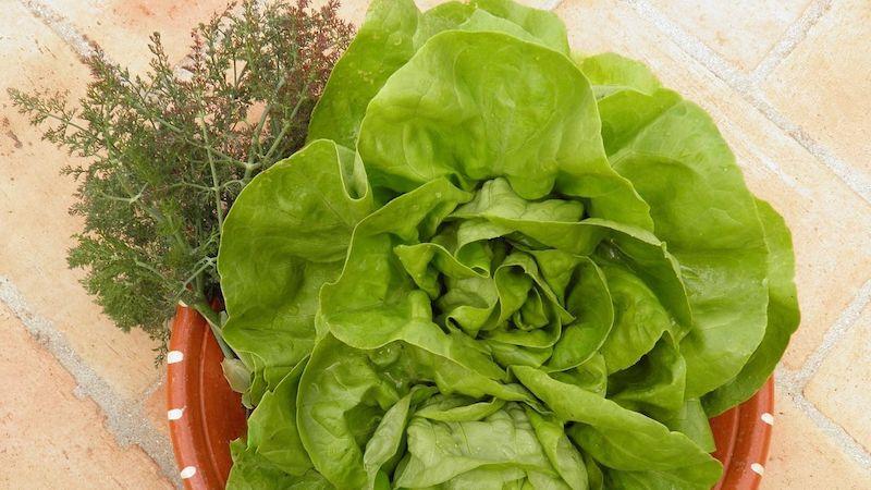 rasen im september aussäen güner salat imseptember aussäen gürner salat im topf