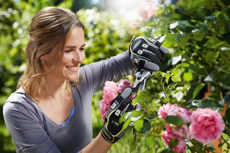 rosen pflegen rosen schneiden fehler wie schneidet man rosen im herbst frau schneidet rosenbusche lächelnd