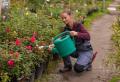 Rosen schneiden im Herbst – was müssen Sie über ihre Pflege wissen?