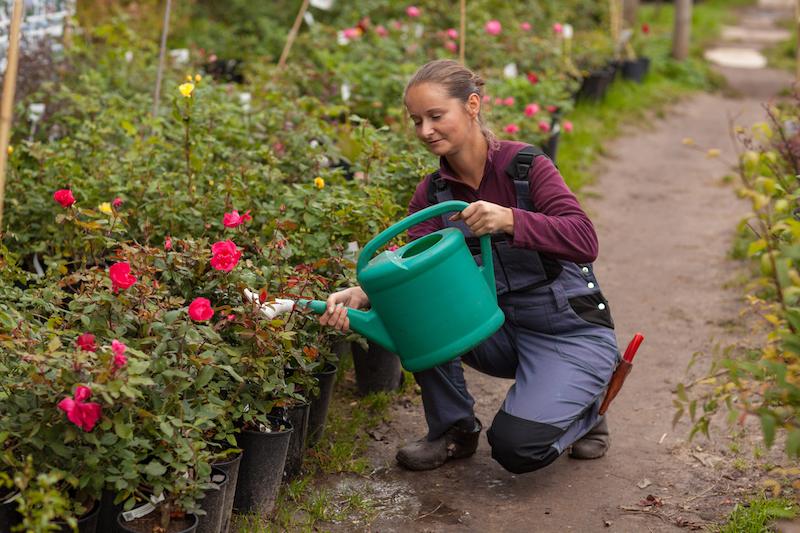 woman gardener watering the flowers in the garden