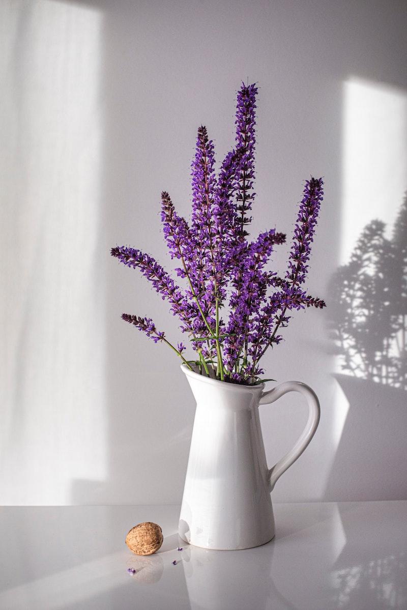 schöne weiße vase mit lavandula begleitpflanzen lavendel