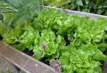 Aussäen im September  – welche Pflanzen sind geeignet und wie pflegt man sie?