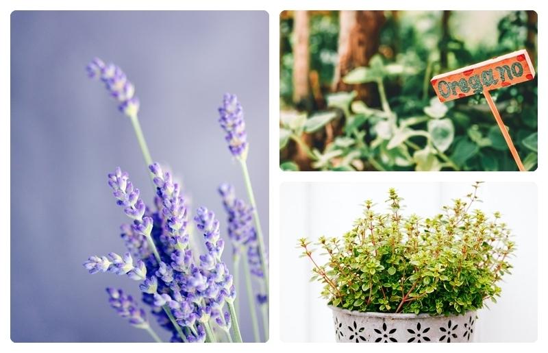 was passt zu lavendel thymian oregano