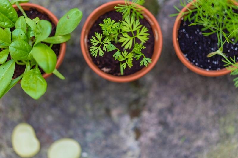 welche kräuter passen zusammen topfkräuter pflanzen in töpfen