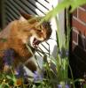 welche pflanzen kann ich gegen katzen pflanzen braune katze isst blumen