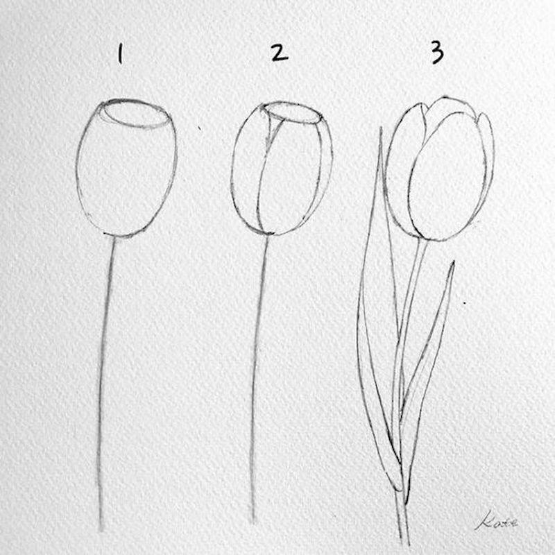 zeichenideen tulpe in drei schritten zeichnen illustriert mit bleistift