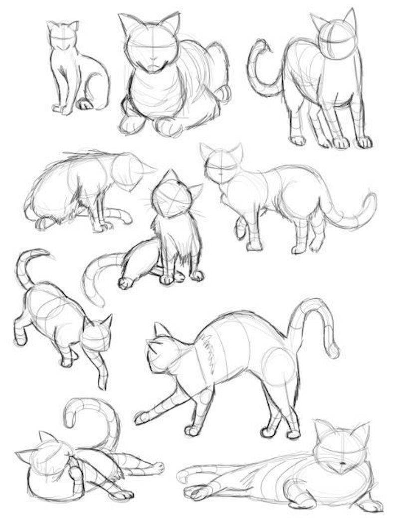 zeichnen vorlagen katze zeichen in zehn positionen illustriert